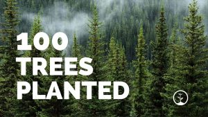 100 Trees Planted with forest in the backgroud